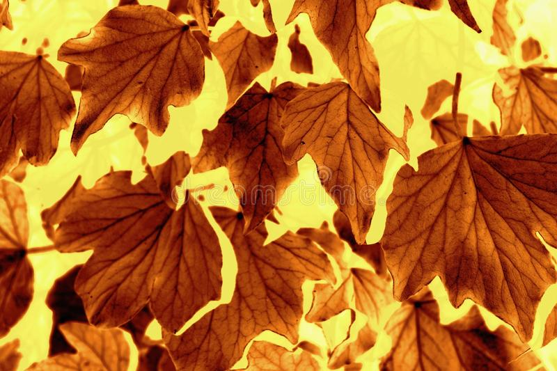 Autumn Leaf pattern. In brown and yellow royalty free stock photos