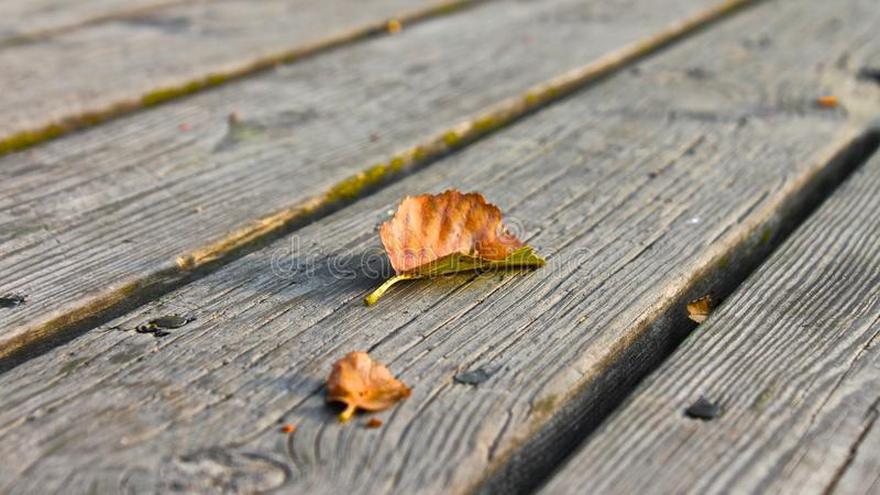 Autumn leaf on a pier royalty free stock images