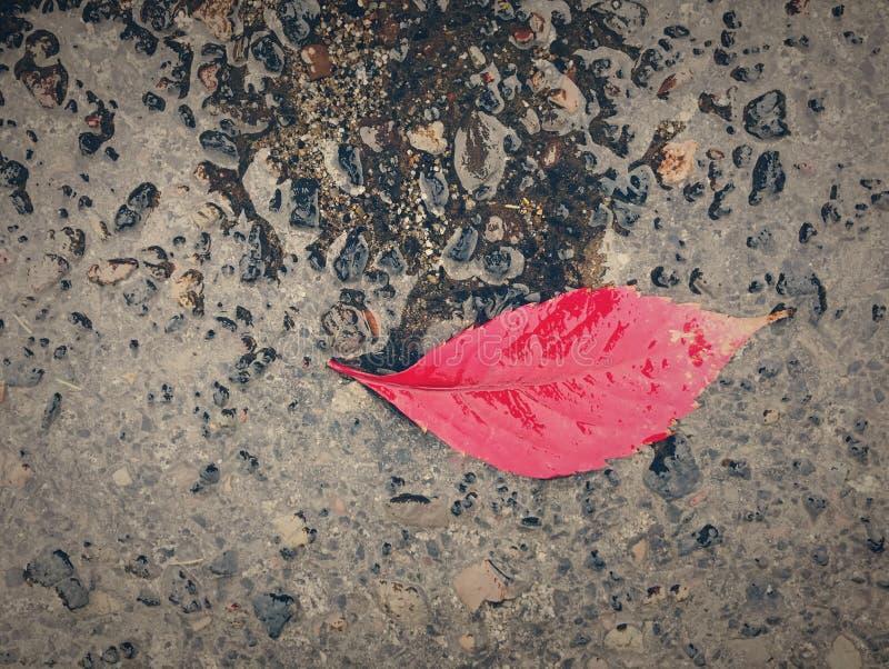 Autumn Leaf in pioggia immagine stock libera da diritti