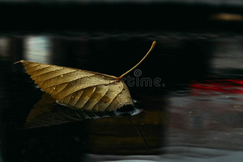 Autumn leaf in a puddle with reflections of show-windows. Autumn leaf in a dark puddle. Reflections of shop windows stock photo