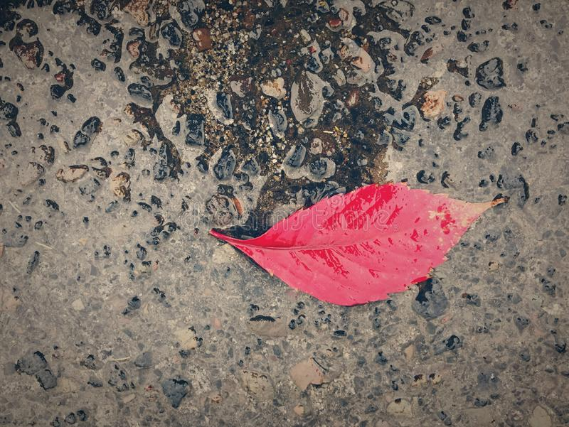Autumn Leaf in Rain royalty free stock image