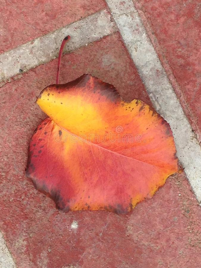 Autumn leaf on red brick. Close up of colorful autumn leaf on red brick and mortar royalty free stock photo