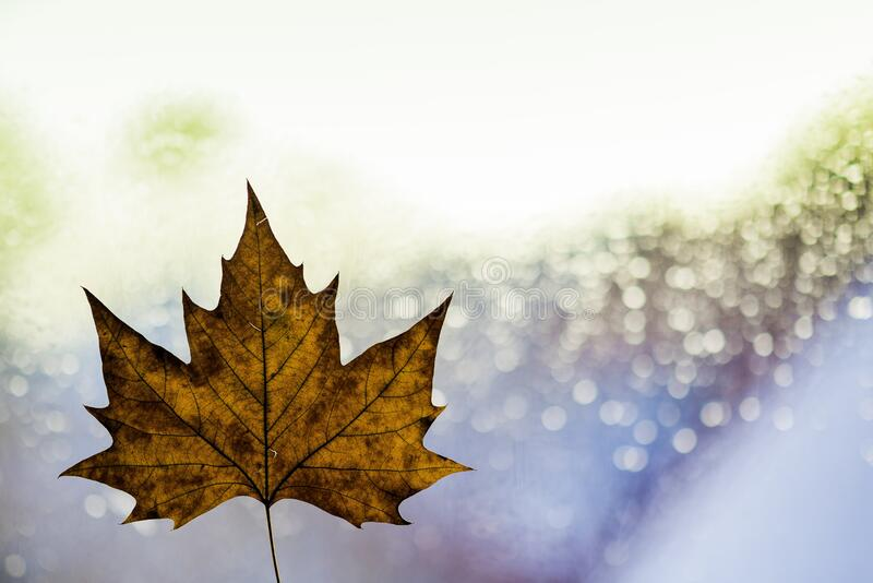 Autumn Leaf And Sparkling Background Free Public Domain Cc0 Image