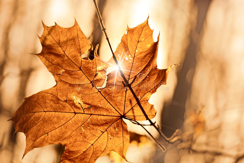 Autumn leaf stuck in forest. Dry autumn leaf stuck in forest royalty free stock photos