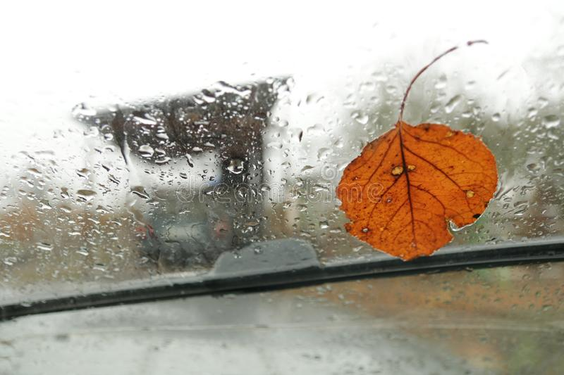 Autumn leaf stuck to the windshield that gets wet from rain drops. stock photos