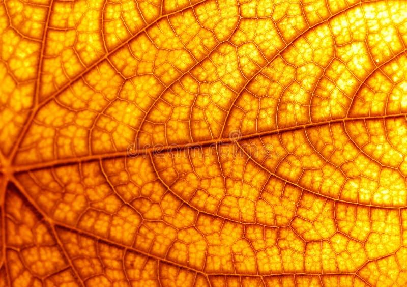 Autumn leaf texture royalty free stock photos