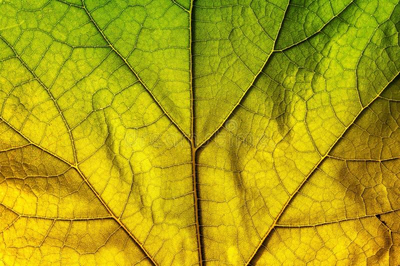 Autumn Leaf Texture stockbilder
