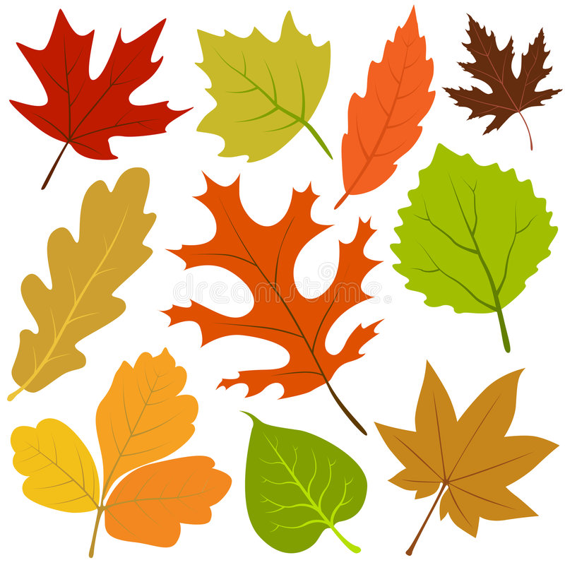 Free Autumn Leaf Vector Royalty Free Stock Image - 6999106
