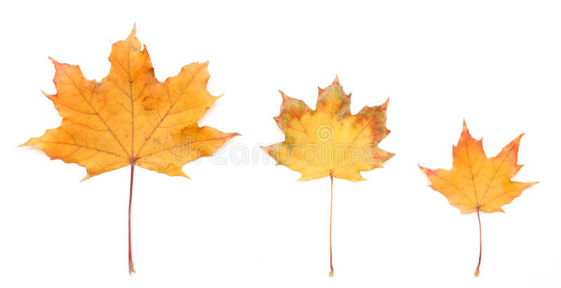 Download Autumn Leaf Stock Photos - Image: 35162893