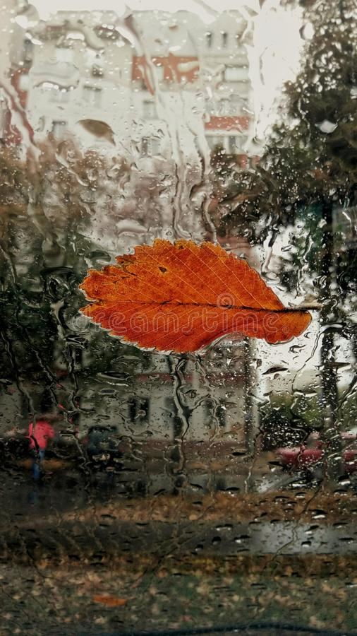 Autumn leaf on the windshield stock image