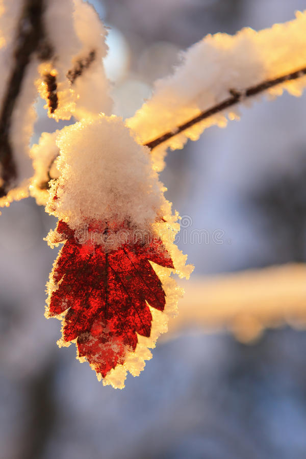 Autumn leaf in winter stock photography