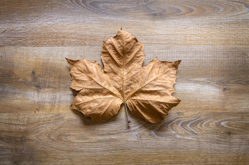 Autumn leaf in a wooden background royalty free stock image
