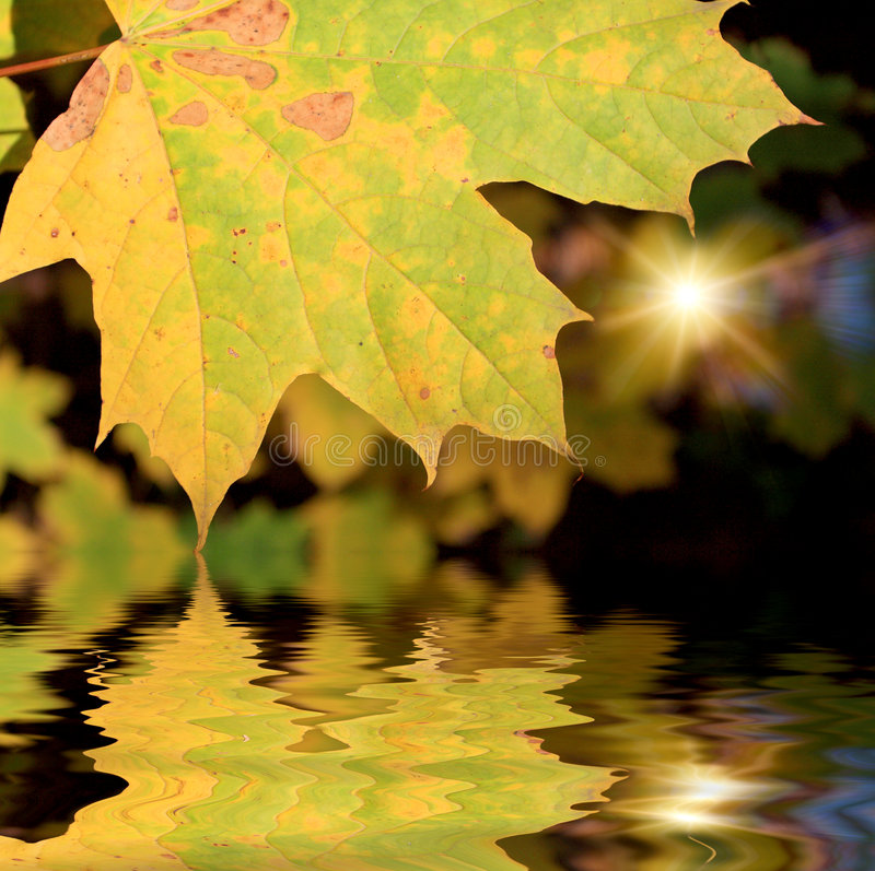Download The autumn leafage stock photo. Image of fall, beautiful - 7640518