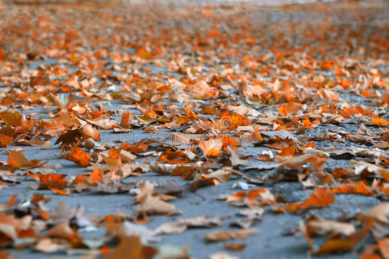Download Autumn Leafs Stock Photography - Image: 17042672