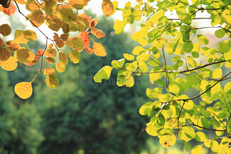 Download Autumn Leafs stock image. Image of green, purple, isolated - 27261765