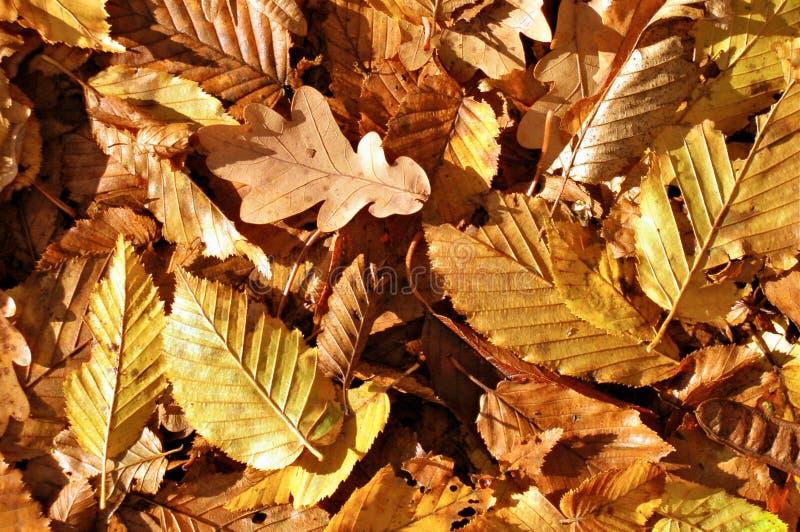 Autumn leafs stock photo