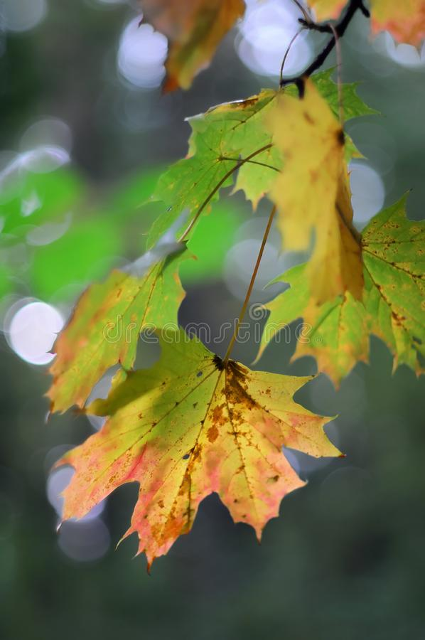 Download Autumn leafs stock image. Image of scene, orange, leafs - 6643229