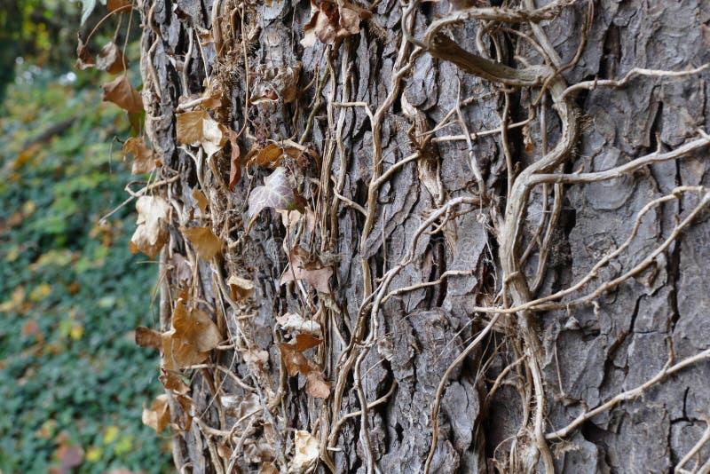 Autumn leafs. On dry tree stock photos