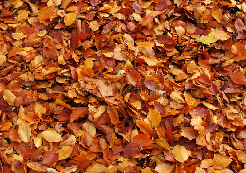 Autumn leafs background. Beautiful autumn leafs in a park stock photos