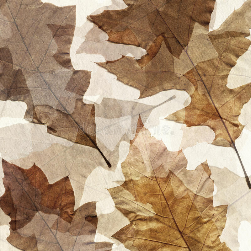 Download Autumn Leafs Grunge Background Stock Illustration - Image: 33837383