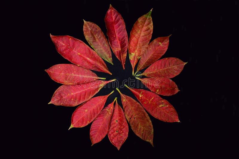 Autumn Leafs op Dark stock foto