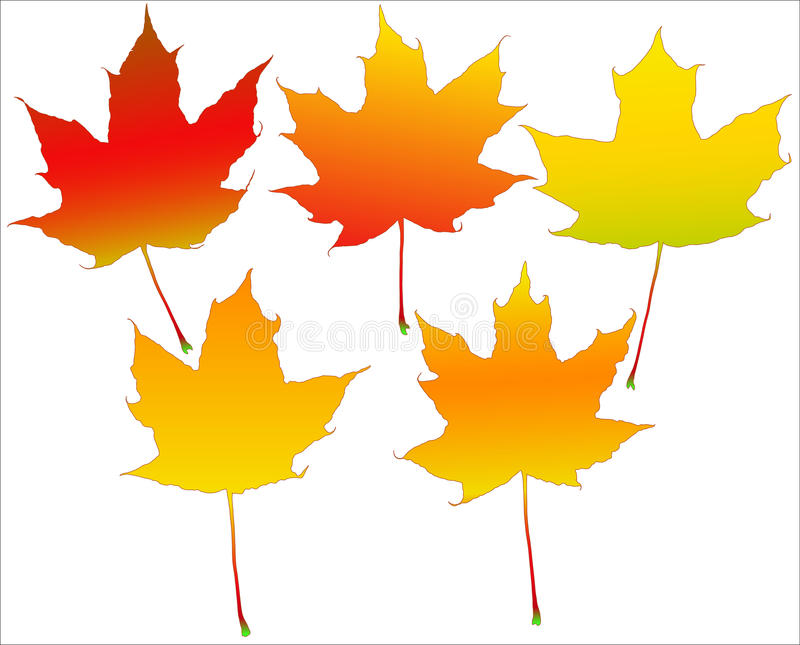 Autumn leafs set royalty free illustration