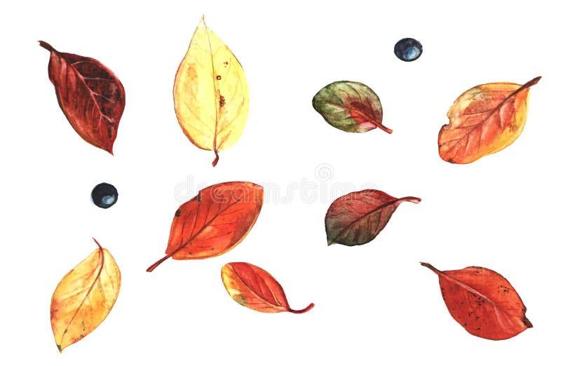 Autumn leafs set vector illustration