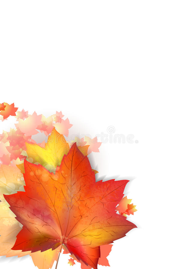 Autumn leafs on the white backgroun with copyspace. Autumn leafs on the white backgroun with copyspace royalty free illustration