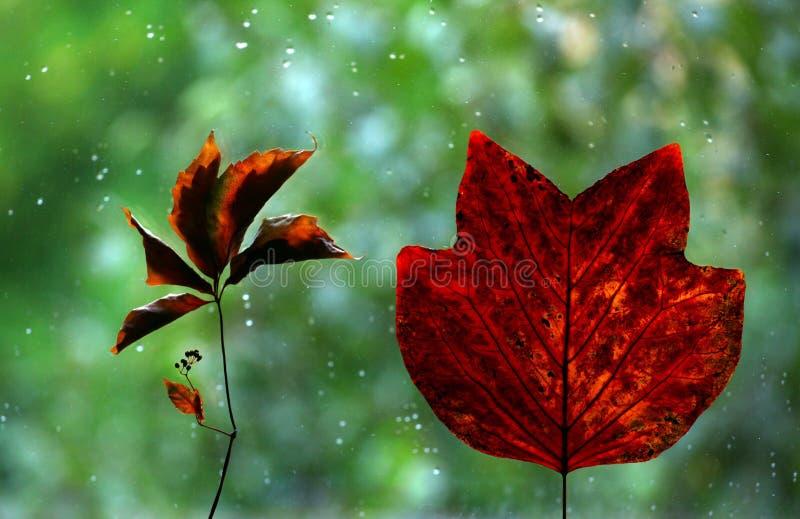 Autumn leafs window rain drops stock photos