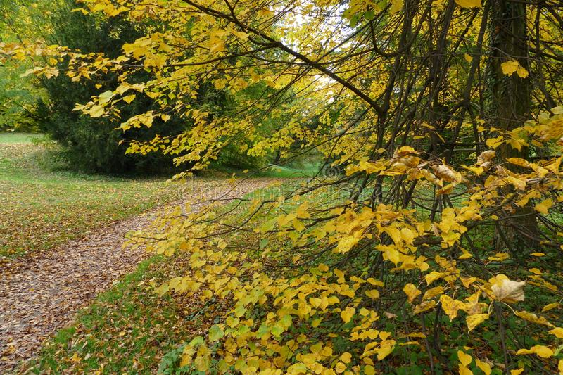 Autumn leafs. Yellow autumn leafs on branch stock image