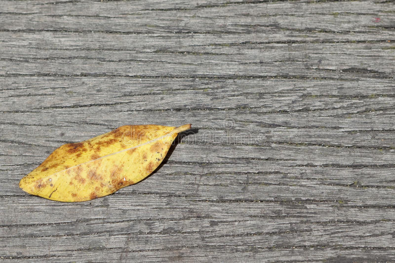 Autumn leave stock photos