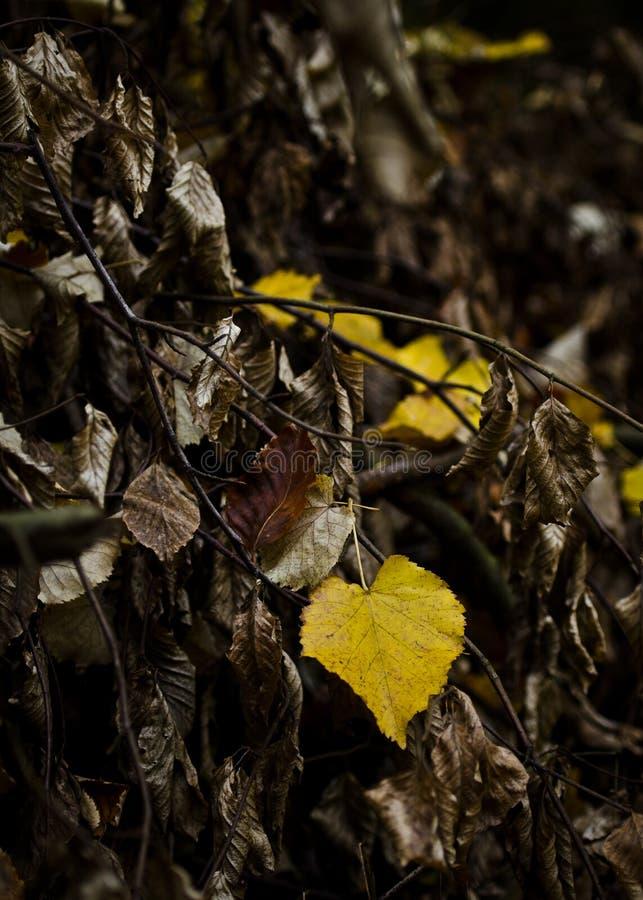 Autumn leave royalty free stock photos