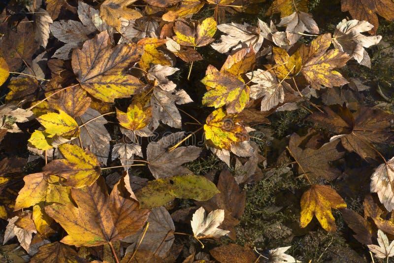 Autumn Leave Fantasy stockfoto