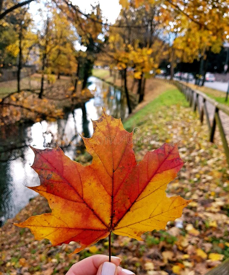 Download Autumn leave stock image. Image of winter, leaves, italy - 105343643