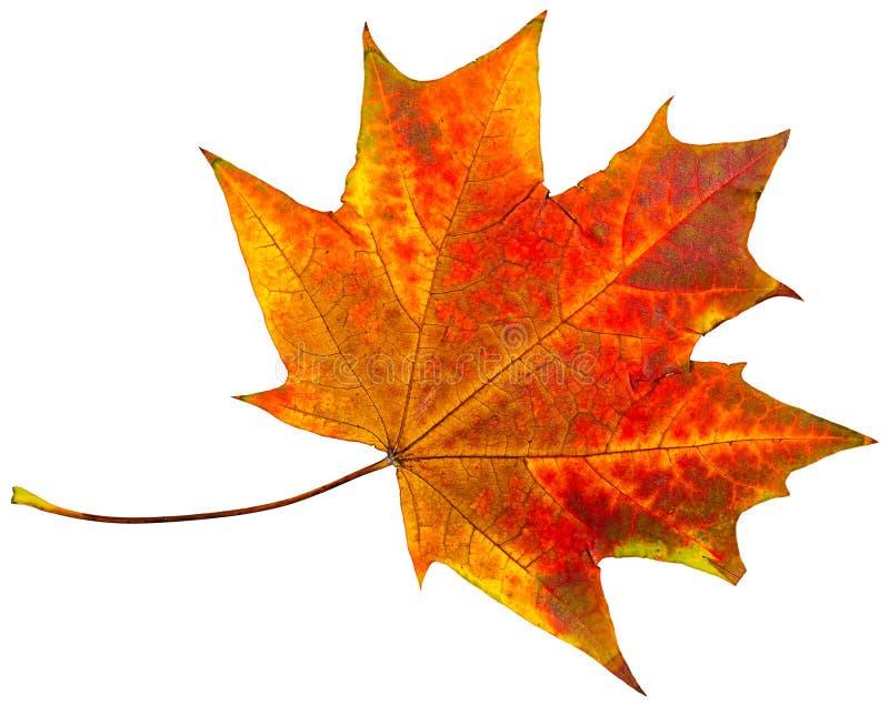 Download Autumn Leaves imagen de archivo. Imagen de caída, otoñal - 100525945