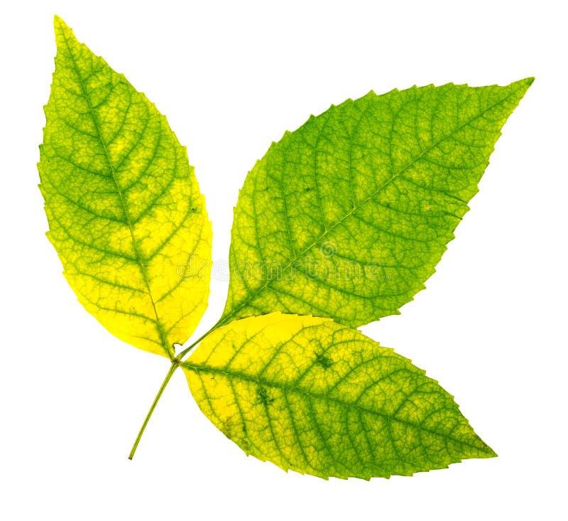 Download Autumn Leaves foto de archivo. Imagen de decoración - 100526312