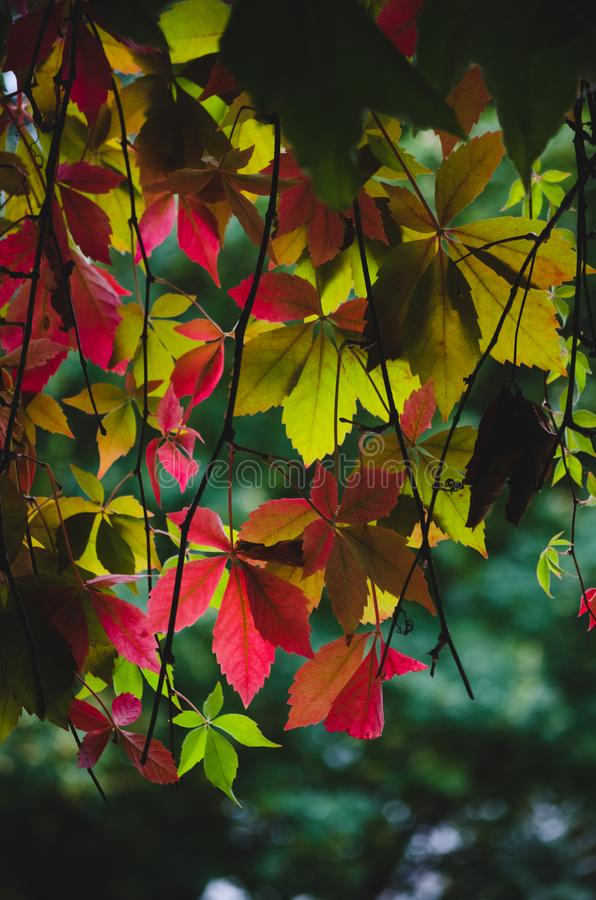 Autumn Leaves stockfotos