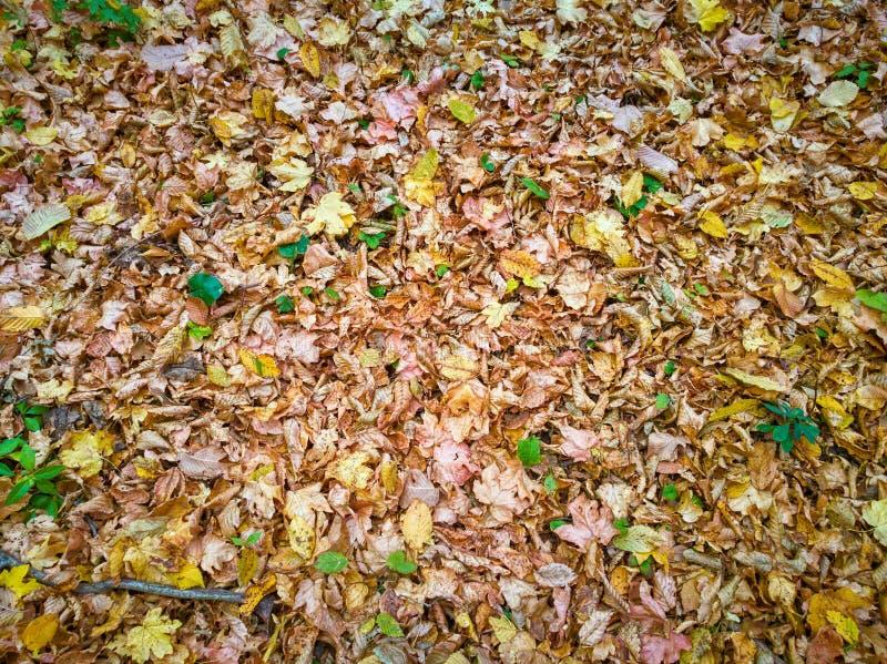 Autumn Leaves stock afbeelding