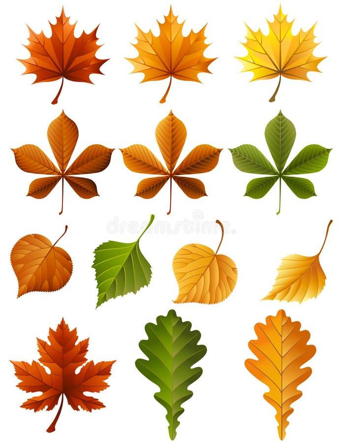 Download Autumn leaves stock vector. Image of autumn, deciduous - 10852726
