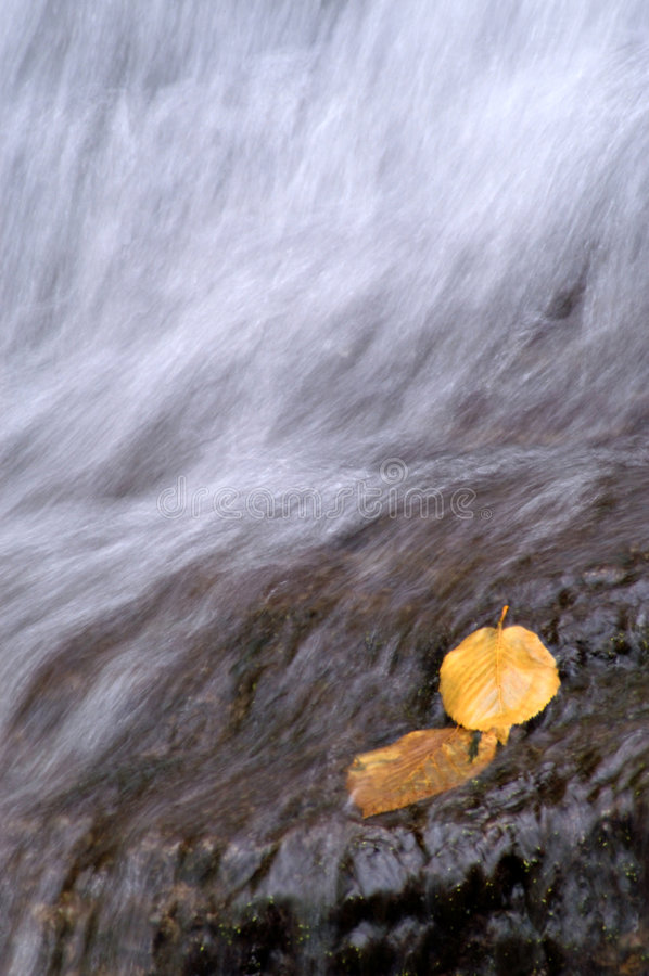 Free Autumn Leaves Royalty Free Stock Image - 1110436