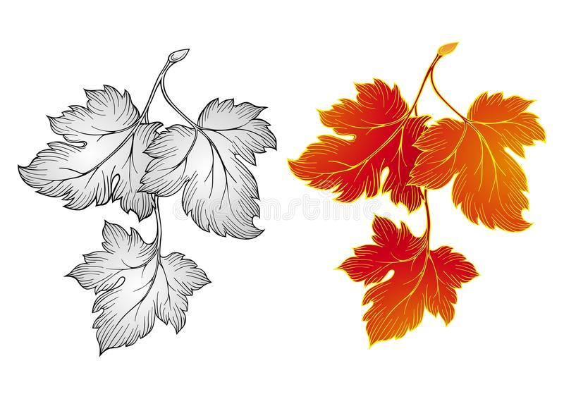 Download Autumn leaves stock vector. Illustration of filigree - 11740486