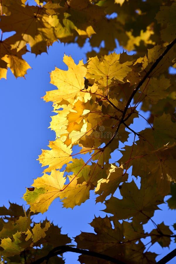 Autumn Leaves immagine stock libera da diritti