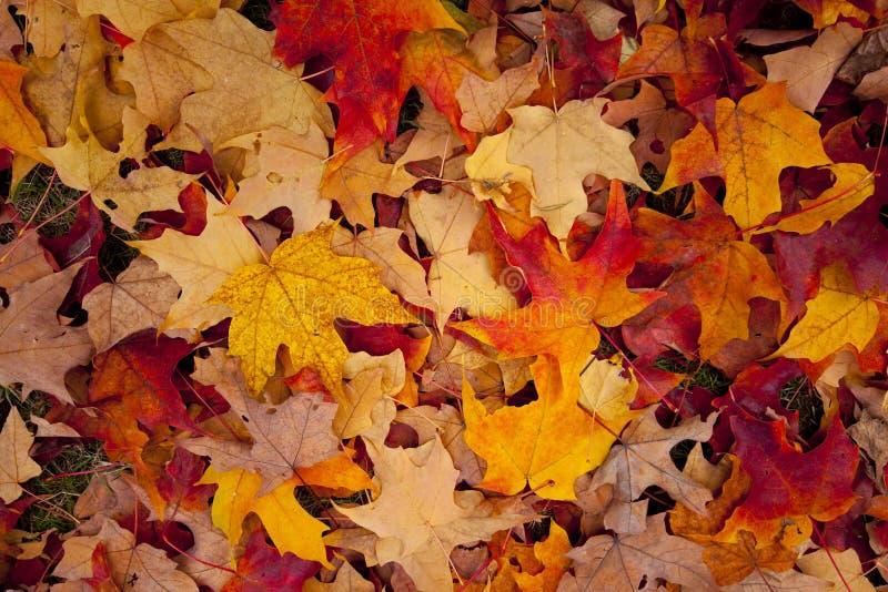 Download Autumn leaves stock image. Image of avenue, concrete - 12949101