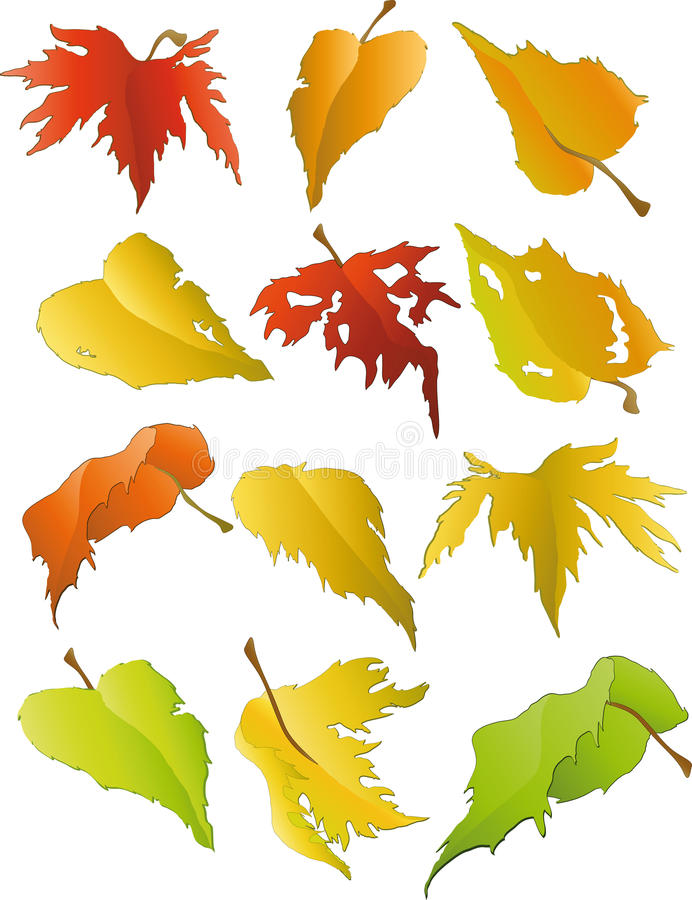 Autumn leaves royalty free illustration