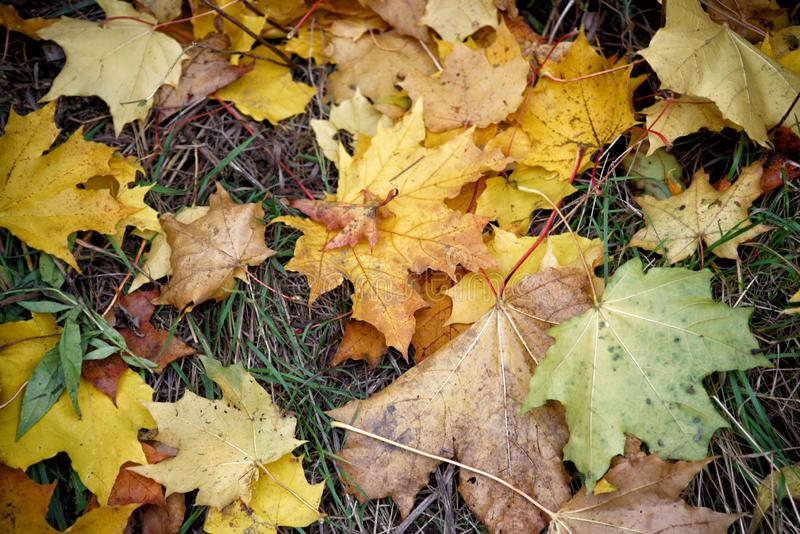 Autumn Leaves photographie stock