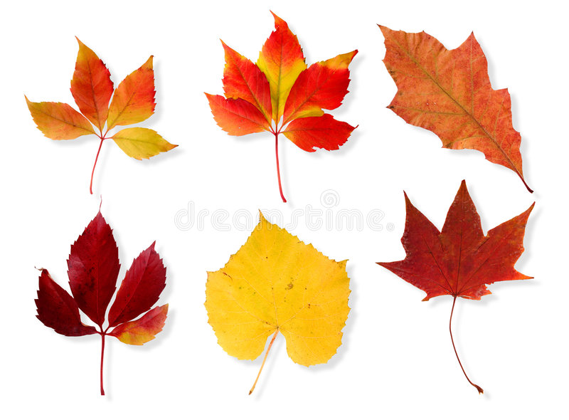 Download Autumn Leaves Royalty Free Stock Images - Image: 1404819