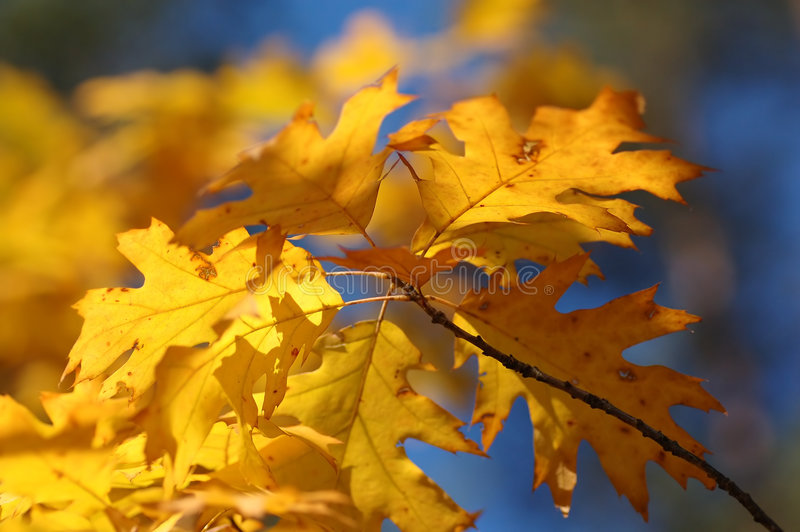 Download Autumn leaves stock photo. Image of background, hike, brown - 1431482