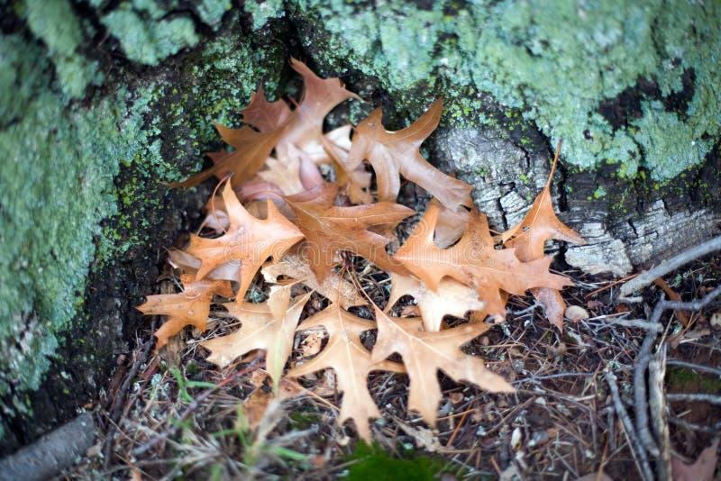 Download Autumn Leaves stock image. Image of seasonal, leaves - 14850027