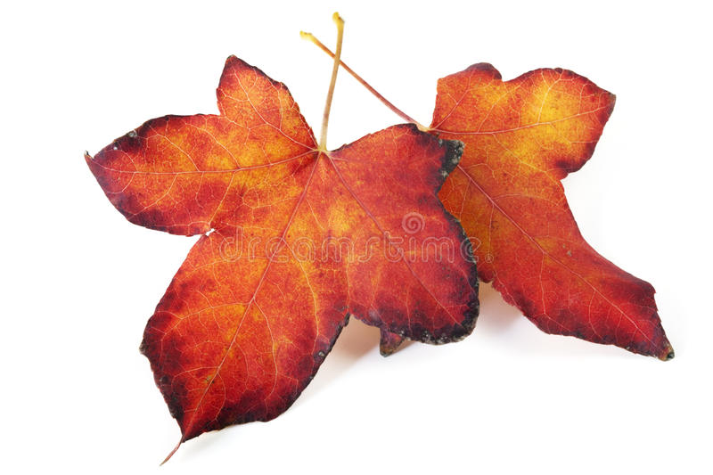 Download Autumn Leaves Stock Image - Image: 14861231