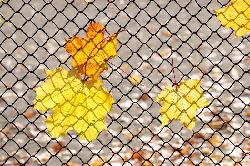 Download Autumn leaves stock photo. Image of fall, focus, black - 15148118